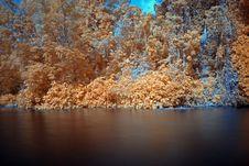 Free Infrared Photo – Tree And Lake Stock Image - 3518711