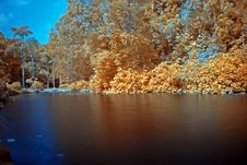 Free Infrared Photo – Tree And Lake Stock Images - 3518714