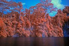 Free Infrared Photo – Tree And Lake Stock Image - 3518751
