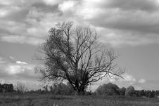 Free Tree Lonely In Field Royalty Free Stock Images - 3518979