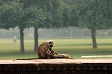 Free Nursing Monkey Stock Images - 3519384