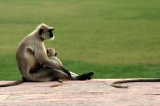 Free Mom And Baby Monkey Stock Images - 3519474