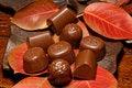 Free Autumn Chocolates Stock Image - 35103301