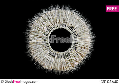 Free Wreath Of Ears Of Barley Stock Photo - 35105640