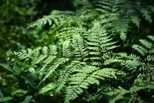 Free Ferns Stock Photos - 35100273
