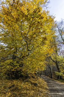 Free Autumn Colors Royalty Free Stock Photography - 35102987