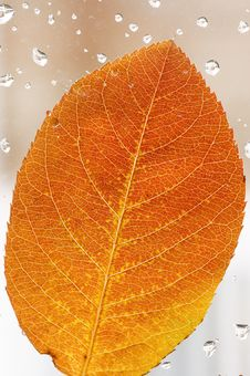 Free Autumn Leaf Royalty Free Stock Photo - 35103155