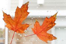 Free Autumn Leaf Stock Photos - 35103173