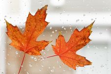 Free Autumn Leaf Royalty Free Stock Photos - 35103188