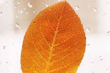 Free Autumn Leaf Royalty Free Stock Photos - 35103198