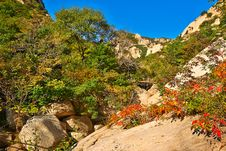 The Red Leaves On The Hillside Of Zu Mountain Royalty Free Stock Photos