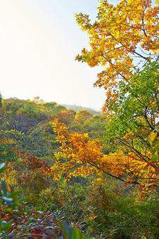 Free The Autumn Scenery Of Zu Mountain Royalty Free Stock Photo - 35107275