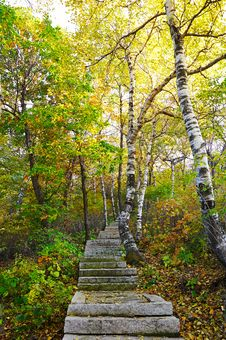 Free The Stone Steps And Silver Birch Of Zu Mountain Stock Image - 35107281