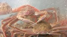 Crabs In An Aquarium Stock Photo
