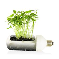 Eco Energy Bulb. Stock Photography