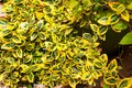 Free Green And Yellow Plant Stock Photography - 35120652