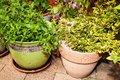 Free Plants In Flowerpots Royalty Free Stock Photos - 35120708