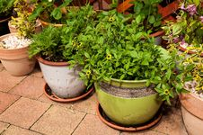 Plants In Flowerpots Stock Photos