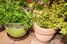 Free Plants In Flowerpots Royalty Free Stock Photos - 35120708