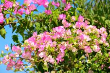 Free Branch With Pink Flowers And Green Leaves Horizontal Royalty Free Stock Photo - 35125675