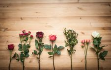 Free Different  Roses On Wooden Background Stock Image - 35128091