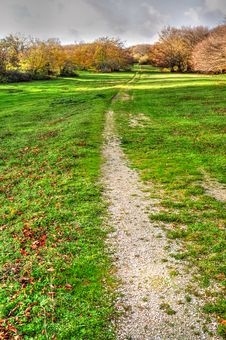 Path To Forest Royalty Free Stock Image