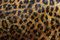 Free Leopard Spots Stock Images - 35131754