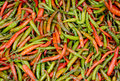 Free Hot Chilly Stock Images - 35141494