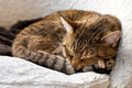 Free Relaxing Cat At Home Stock Photos - 35142623