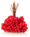 Free Linking Of Berries A Guelder-rose Stock Image - 35145421