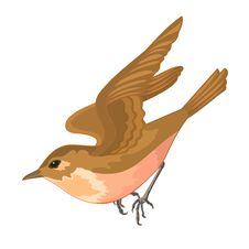 Free 0range Bird Royalty Free Stock Photo - 35140315