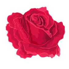 Roses Red Simple Royalty Free Stock Image