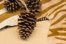 Free Pine Cone & Zebra Print Stock Photos - 35142233
