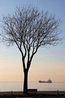 Free Ship And Tree At Marmara Sea Istanbul Royalty Free Stock Photo - 35144585