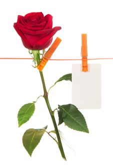 Free The Rose And Card Hang On A Linen Rope Royalty Free Stock Photos - 35145238