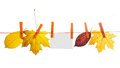 Free Different Autumn Leaves And Empty Card Hang On A Stock Photography - 35150272