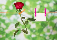 Free The Rose And Card Hang On A Linen Rope Stock Photo - 35150220