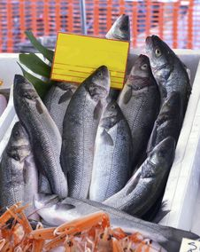 Free Seabass Fish On The Counter Stock Images - 35151324