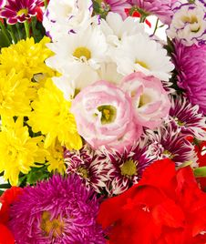 Free Bright Flowers Royalty Free Stock Photos - 35155818