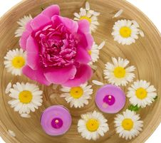 Heads Of Camomiles, A Peony And Burning Candles In Stock Photo