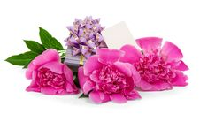 Free Pink Peonies, The Gift Box Decorated With Ribbon Stock Images - 35155894