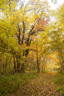 Free Autumn Wood Stock Photo - 35159720