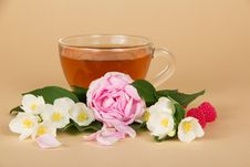 Free Cup Of Tea, Branches Jasmine And Rose Royalty Free Stock Image - 35162436