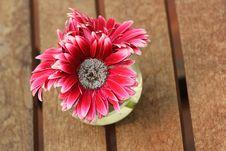 Free Beautiful Gerbera Or Barberton Daisy Royalty Free Stock Photos - 35165028