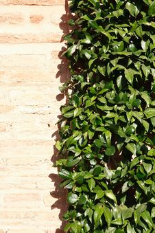 Free Leaves On The Wall Royalty Free Stock Images - 35167489