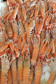 Free Fresh Scampi For Sale At A Market Stock Images - 35171874