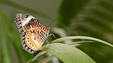 Free Butterfly On A Leaf Royalty Free Stock Photo - 35176835