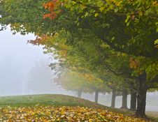 Autumn Leaves On Hillside In Fog Royalty Free Stock Photography