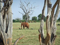 Free The Elephant Stock Photo - 35186620