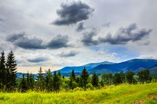Free Forest On A Steep Mountain Royalty Free Stock Photos - 35185448